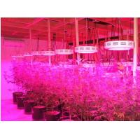 Wholesale Red/Blue mercury,IR and UV led grow lamp,90w Indoor LED Grow Light(CE&ROHS) from china suppliers
