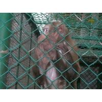 Buy cheap PVC 2 Inch Galvanized Chain Link  Wire Mesh Fencing , Chain Link Metal Mesh from wholesalers