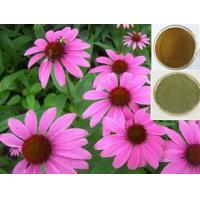 Wholesale hot-selling Echinacea 4% Polyphenol,Cichoric Acid, Echinacea Purpurea P.E.,raw material from china suppliers