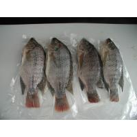 Wholesale frozen fish tilapia frozen tilapia fillet price from china suppliers