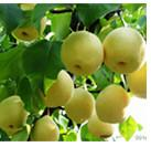 Wholesale Fruit Tree Insecticide Clofentezine 10% WP 25% SC acaricide CAS 74115-24-5 from china suppliers