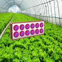 Wholesale High Power LED Grow Light,High Power LED Grow Lamps from china suppliers