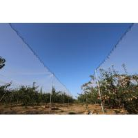 Wholesale Anti Hail Net for Protect Your Plant, Vegetables, Fruits, etc from china suppliers