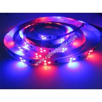 Wholesale 12v 60led ws2811 led pixel strip from china suppliers