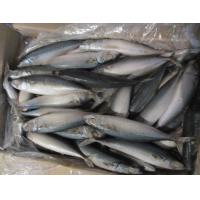 Wholesale Good Quality Frozen Whole Round Pacific Mackerel Fish With 10kg/ctn. from china suppliers