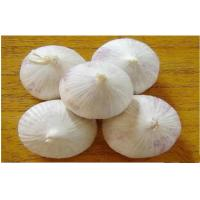 Wholesale 4.0 - 6.5CM White Organic Fresh Garlic For Preventing Diabetes Mellitus from china suppliers