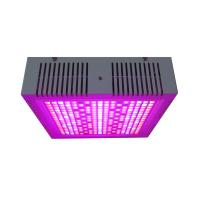 Wholesale Osunby 600W Dimmable LED Grow Lights Full Spectrum for Indoor Greenhouse Plants from china suppliers