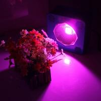 Quality Horticulture Indoor Cree Led Grow Lights For Vegetative Growth And Seedling for sale