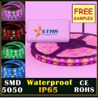 Wholesale RGBW SMD5050 Led Flexible Strip Light 12V / 24V , RGBW led strip light from china suppliers