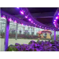 High Efficient Full Spectrum 300W LED Grow Light for Medical Plants Veg and Bloom Indoor flower Plant 3 Years Warranty