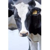 Wholesale Livestock Traceability Management Solution from china suppliers