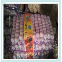 Wholesale Chinese fresh garlic for sale in shandong New Crop Garlic from china suppliers