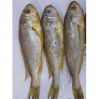 Wholesale high demand frozen wild yellow croaker IQF 50-70g ,bulk in carton. from china suppliers