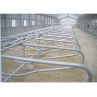 Wholesale Hot Dip Galvanized Cattle Stall With Bovine Jugular Track , Clamp , Bolt from china suppliers