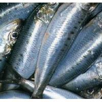 Wholesale China Wholesale Price BQF 10KG/CTN Frozen WR Sardine Fish for Sale. from china suppliers