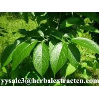 Wholesale Eucommia Leaf Extract, Chlorogenic acid  30%,98%, CAS No.: 327-97-9, 10:1, Chinese manufacturer, Shaanxi Yongyuan from china suppliers