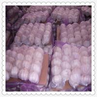 Wholesale new crop fresh garlic Fresh garlic in small mesh bag in bag from china suppliers