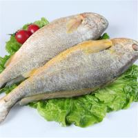 2016 year competitive price new coming frozen fresh whole round yellow croaker fish.