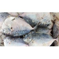 Wholesale Frozen Seafood Caught Whole Round Moonfish Supplied From China. from china suppliers