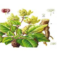Wholesale Natural Rhubarb Extract Emodin CAS No.518-82-1 and Rhein CAS No.478-43-3 from china suppliers