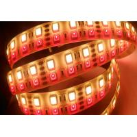 Wholesale Double Row 5050 SMD IP68 Rgbw Led Strip Light Waterproof Super Brightness from china suppliers