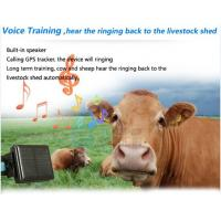Wholesale Animal tracking device for cow tracker gps sos button/alarm waterproof solar wireless char from china suppliers