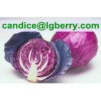 Wholesale High quality red cabbage extract /anthocyanin from china suppliers