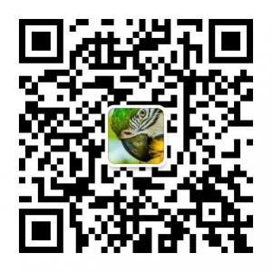 Wholesale Berly detergent powder Yemen from china suppliers
