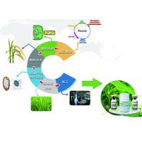 Wholesale Recombinant Protein Service Providing Technical Solutions To Express Customers Protein from china suppliers