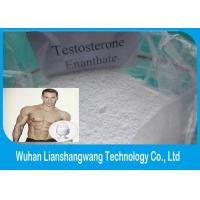 Wholesale 99% Purity Testosterone Anabolic Steroid , Testosterone Enanthate For Muscle Growth CAS 315-37-7 from china suppliers