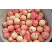 Wholesale Health Benifits Of Organic Fuji Apple Containing Lutein And Zeaxanthin, Dense crisp, juicy, Sweet and sour moderate from china suppliers