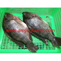 Wholesale High quality fresh tilapia GS processed from alive fish from china suppliers
