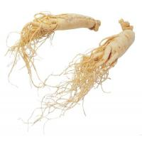 China Ginseng Extract,natural plant extract on sale