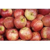 Buy cheap Smooth Tastey Organic Fuji Apple Containing Calcium , Vitamin With No Pollution from wholesalers