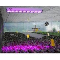 Wholesale Cidly 3W Apollo LED Grow Light With High Power from china suppliers
