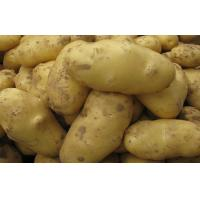 Wholesale White Skin Shandong Holland Potato Rich Nutritions For Storing from china suppliers