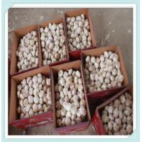 Wholesale Purple Garlic Price Chinese Fresh Garlic jinxiang best quality from china suppliers