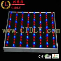 Wholesale New Low Power LED Grow Light 45W for Greenhouse and Seeding from china suppliers