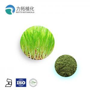 China 100% Natural Wheat Grass Powder / Organic Plant Protein Powder Keep Health on sale
