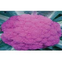Wholesale Organic Purple Freezing Fresh Cauliflower Low Fat , 40 - 60 Mm from china suppliers