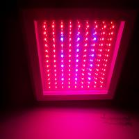 Wholesale 4800lm 80 CRI SMD Led Growing Lights 700mA AC 100 ~ 240V waterproof for garden / greenhouse from china suppliers