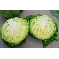 Wholesale Contains Carotenes , Thiocyanates Round Chinese Napa Cabbage Low Calories from china suppliers
