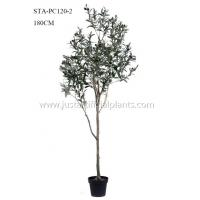 Wholesale 180CM Faux Olive Tree  Fruits 180CM Eco Friendly Plant Plastic Materials from china suppliers