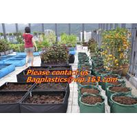Wholesale vegetables, fruits, seeds, bedding plants, tomatoes, peppers, cucumbers, tree starters from china suppliers