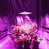 Wholesale SMD Energy Efficient Grow Lights , Dimmable Hydroponics Indoor Plant Lights from china suppliers