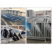 Wholesale Cow headlock and feed panel for livestock plant from china suppliers