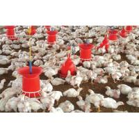 Wholesale automatic poultry equipments of feeder from china suppliers