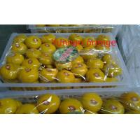 Wholesale Yunnan Nutritional Value Fresh Mandarin Oranges Vitamins B3 , E To Enhance Digestion, The average thickness of 1.1mm from china suppliers
