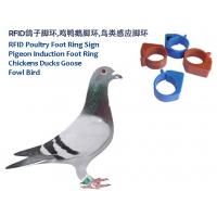 Wholesale RFID Poultry Foot Ring Sign, RFID Pigeon Foot Ring, Chickens Ducks Goose Induction Foot Ring,  Induction Fowl Foot Ring from china suppliers