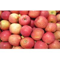 Wholesale Crispy Delicious Red Fresh Fuji Apple Juicy For Baked / Stewed from china suppliers